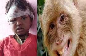 छत पर खेल रही थी बच्ची, तभी आ गया बंदरों का झुंड, फिर जो हुआ पूरे परिवार के उड़ गए होश