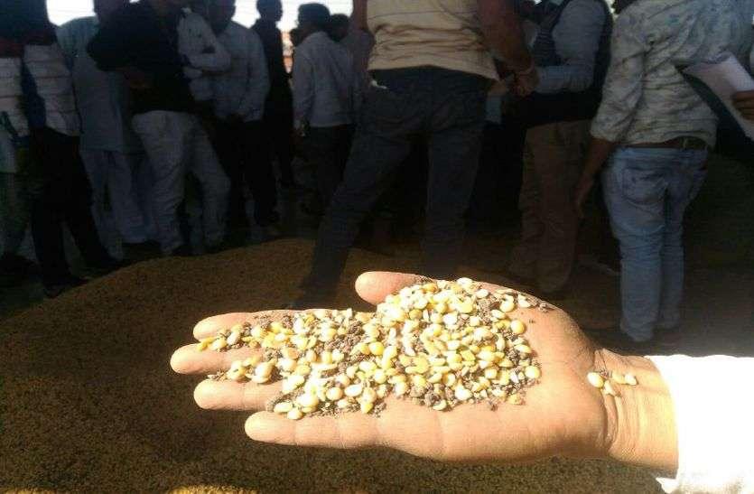 योजना के अंतिम दिन सोयाबीन दाल के भाव देख अचंभित रह गए किसान