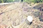 बिना अनुमति के सड़क निर्माण के लिए काट दिया पेड़, मामला उजागर हुआ तो विभाग ने पीडब्ल्यूडी के ईई को थमाया नोटिस, लेकिन नहीं मिला जवाब