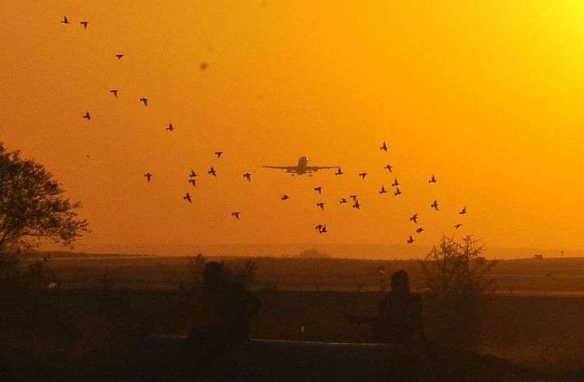 विमानतल पर पक्षियों का झुंड