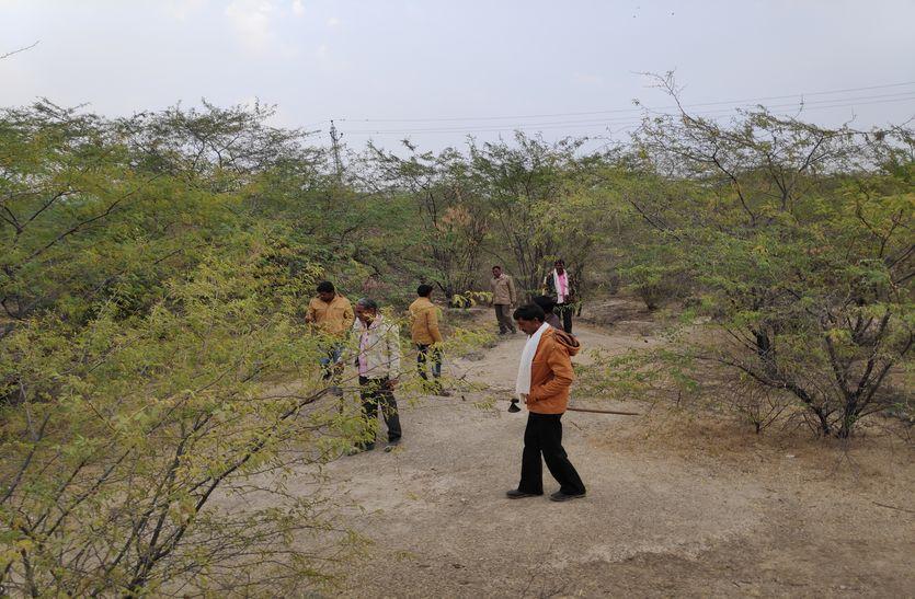 अफसरों की नजरों से ओझल बाघ, चिंता में वन विभाग