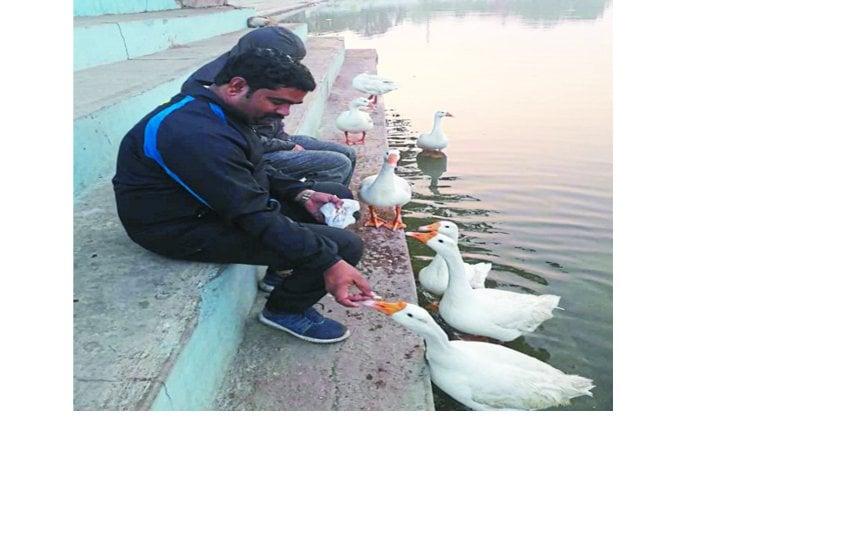 हर दिन लोग बदक, मछलियों को खिला रहे दाना, कर रहे तालाब के घाटों की सफाई