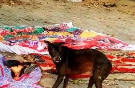 मौत के बाद भी मिला दर्द, कुत्तों का निवाला बना शव