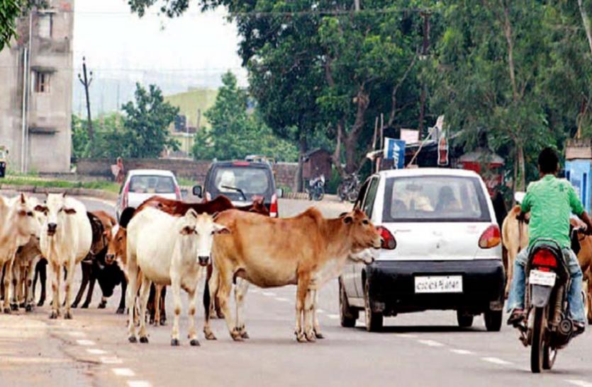 बुलंदशहर में बढ़ा गोवंशों का आतंक, किसानों की बढ़ी मुसीबत
