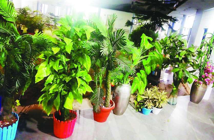 नर्मदा किनारे लगाए गए 7 करोड़ पौधों की नए सिरे से होगी जांच