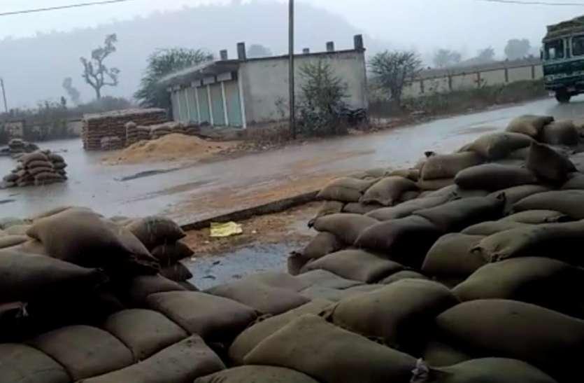 ओलावृष्टि और बारिश ने किसानों की मेहनत पर फेरा पानी, भीगा हजारों क्विंटल अनाज, देखें कैसे