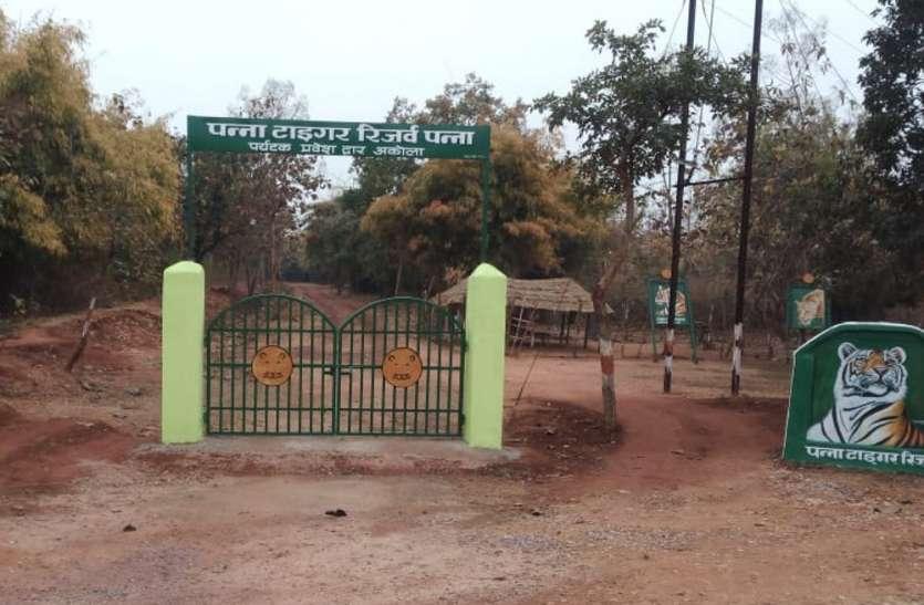 पर्यटकों को बाघ का दीदार कराने पन्ना टाइगर रिजर्व का अकोला गेट तैयार, 30 से प्रवेश, जानिए कैसा रहेगा नजारा
