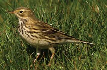 महानगर में दिखी दुर्लभ पक्षियों की चार प्रजातियां