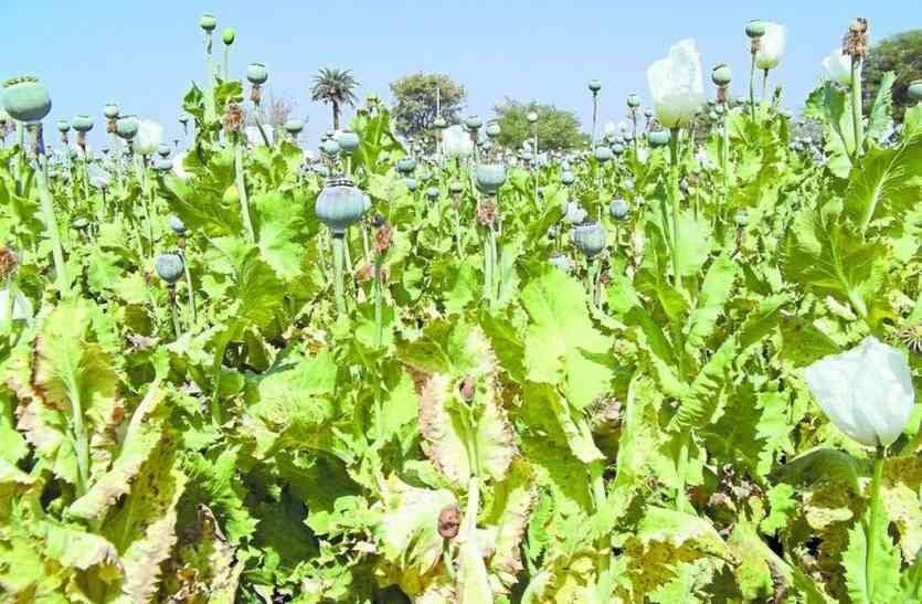 परम्परागत फसलों का बीमा, नवाचार अपनी जोखिम पर