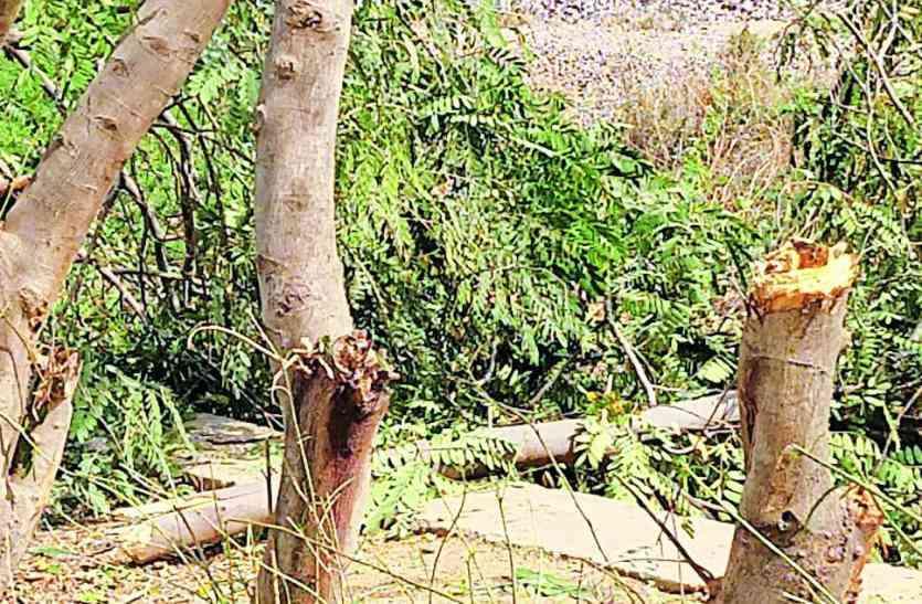 निर्माण कार्यों के लिए की जा रही पेड़ों की अंधाधुंध कटाई, पढ़े खबर