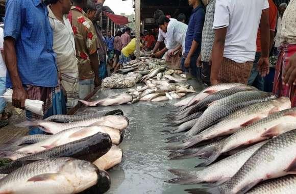 जिले में बजट मिलने के बाद भी नहीं बन सका मत्स्य बाजार, सड़क पर ही बिकती हैं मछलियां, रहवासियों का निकलना हुआ दूभर