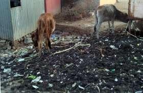सांईखेड़ा में उड़ रही स्वच्छता की धज्जियां : नगरवासी आए दिन होते परेशान