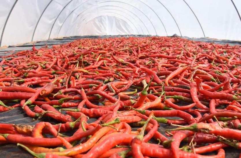 कृषि विश्वविद्यालय में कृषि, देखें तस्वीरें...