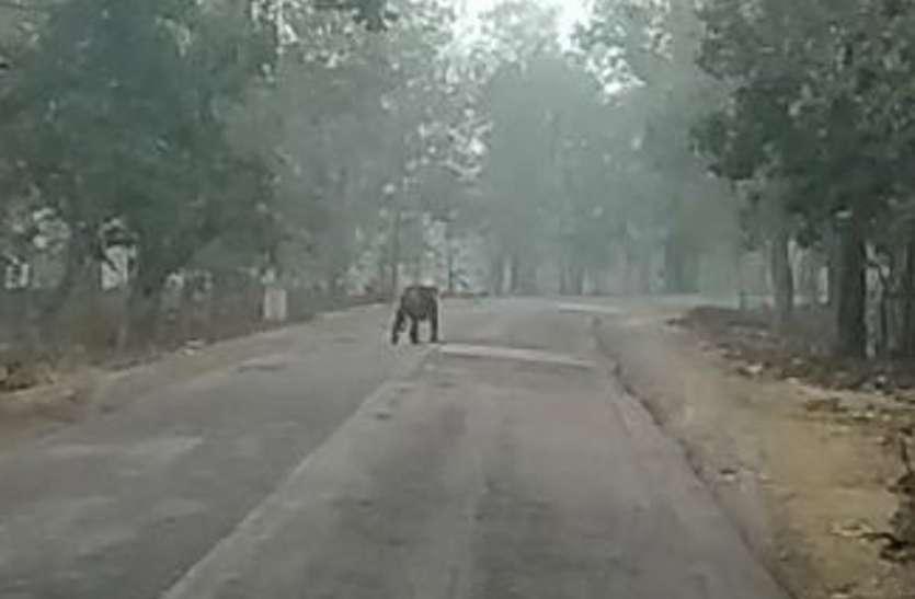 बीच सड़क पर दिखे वनराज, लोगों ने बनाए वीडियो, सोशल मीडिया में किया शेयर, जानिए आगे क्या हुआ