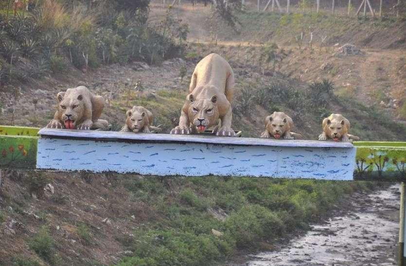 नाले पर शेर