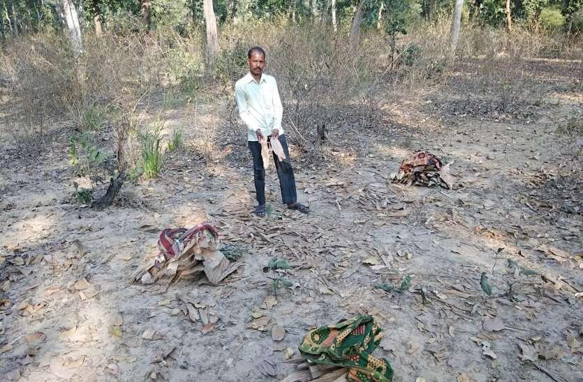 बांधवगढ़ नेशनल पार्क के बफरजोन में माफियाओं ने किया ऐसा हाल की जानवर होने लगे परेशान, देखें वीडियो