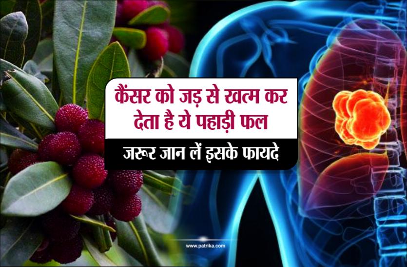कैंसर को जड़ से खत्म कर देता है ये पहाड़ी फल, ज़रूर जान लें इसके फायदे