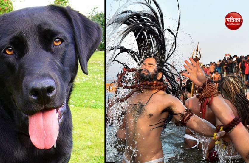 कुंभ मेला 2019 : साधुओं संग नदी में डुबकी लगाता है यह कुत्ता, यज्ञ में भाग लेने वाले इस कुत्ते को नागा बाबा भी मानते हैं सन्यासी