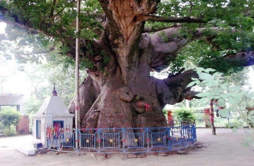 भगवान शिव की आराधना के लिए स्वर्ग से मृत्युलोक लाया गया था यह वृक्ष, इस जिले में आज भी है मौजूद