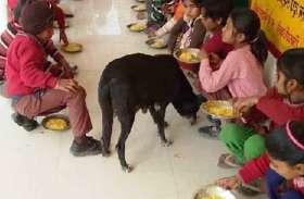 स्कूली बच्चों के निवाले में कुत्तों को मिली हिस्सेदारी