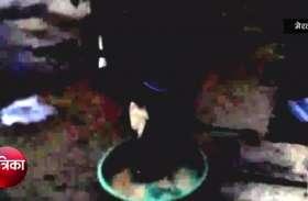 इस गाय की खूबी सुनकर रह जाएंगे दंग, इसका दूध इस बीमारी के लिए है रामबाण, देखें वीडियो