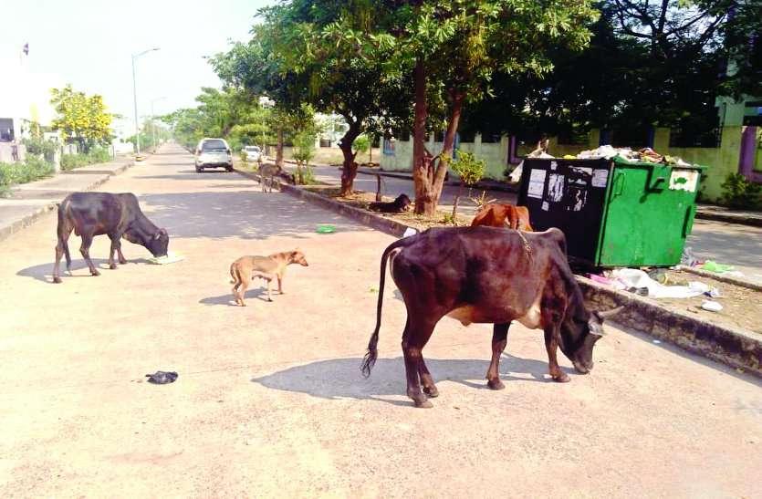 रायपुर में साफ-सफाई के लिए ताकत झोंकी, नया रायपुर में कचरा नहीं उठा पा रहा हाउसिंग बोर्ड