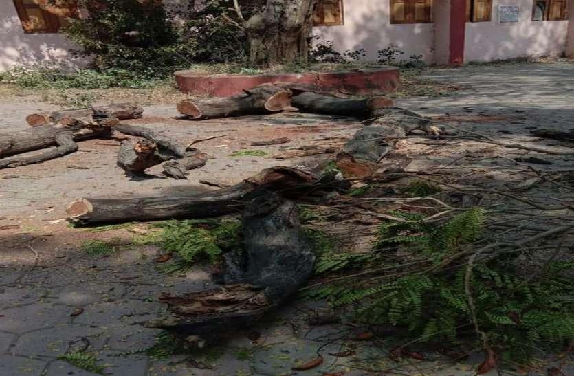 चोरी-छुपे काट गए बेशकमती पेड़, अब पुलिस करेगी जांच