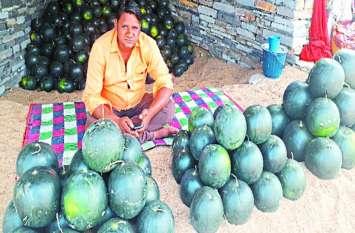कम पानी में भी उत्पादित होते है ये तरबूज, किसानों को मिलता है दुगुना लाभ