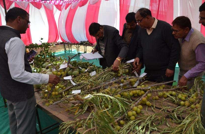 जिले में पौने चार लाख लेकिन मेले में पहुंचे महज डेढ हजार किसान