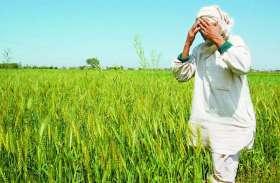 सामूहिक अवकाश से किसानों की ऋण माफी कार्य प्रभावित, लटके ताले
