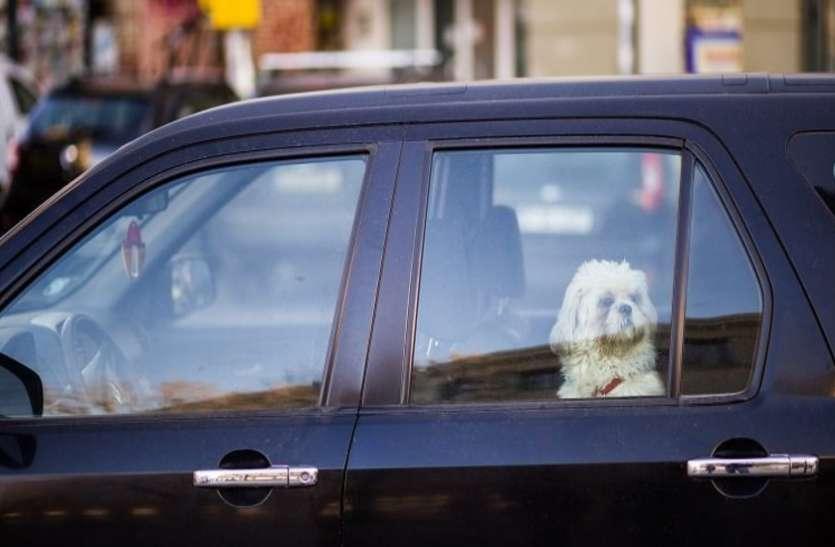 Dog mode और सेंट्री मोड से लैस होंगी इस कंपनी की कारें, परिंदा भी नहीं पर नहीं पार पाएगा