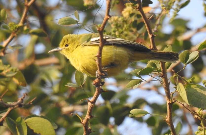 हमें पता ही नहीं कि इतने सुंदर पक्षी हमारे बागों में हैं