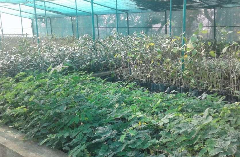 जबलपुर के खास पौधे बदलेंगे दिल्ली की आबोहवा