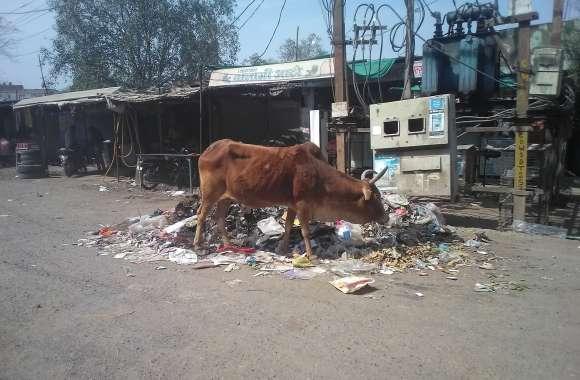 बस स्ठेंड के पास लगे है कचरे के ढेर,सफाई का अभाव