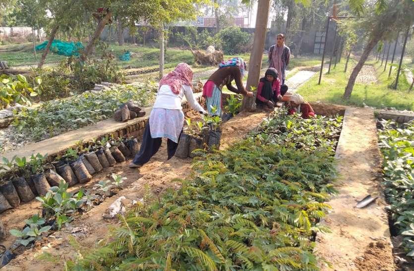 नर्सरी में विकसित होने लगी पौध,महकेगी घर की बगीया