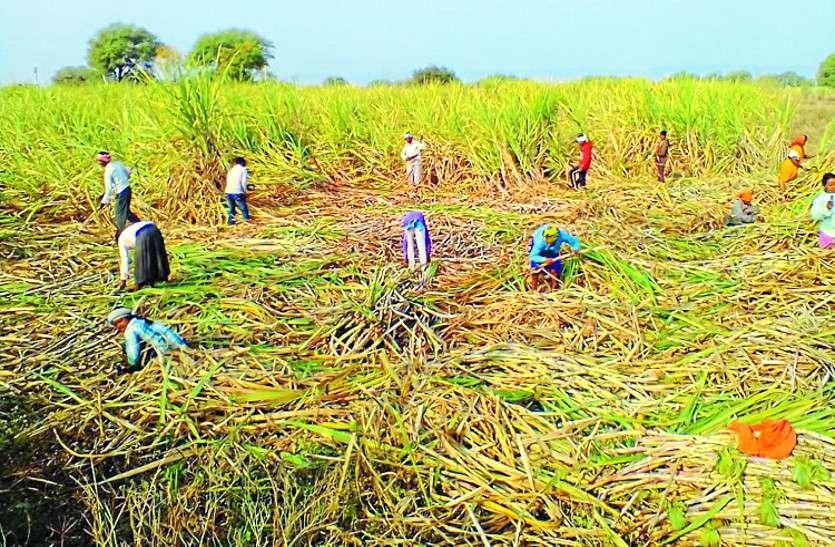 अधिक गन्ना उत्पादन से किसानों को हो रहा लाभ पर तेजी से घट रहा भू-जल स्तर