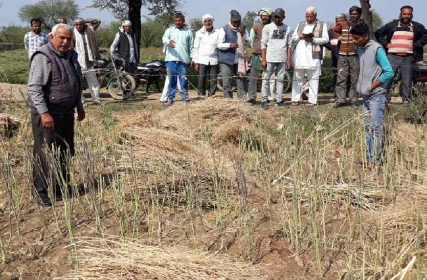 ओलावृष्टि की मार से वेबश किसान को सहायता की दरकार