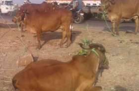 पशु, पंजीकरण, प्रमाणीकरण और प्रजनन विधेयक पारित करने वाला पहला राज्य बना हरियाणा