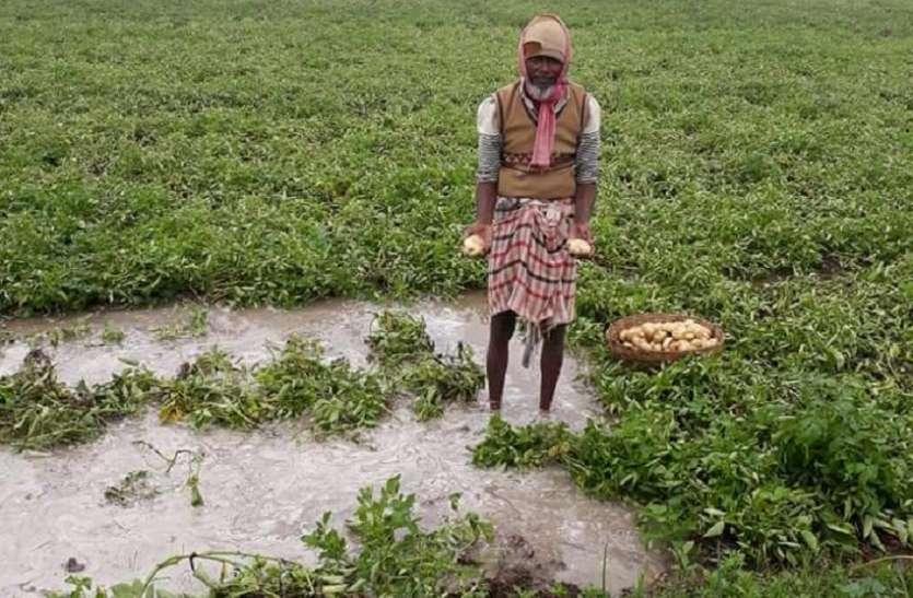 पश्चिम बंगाल में बारिश से किसानों की उम्मीदों पर फिरा पानी