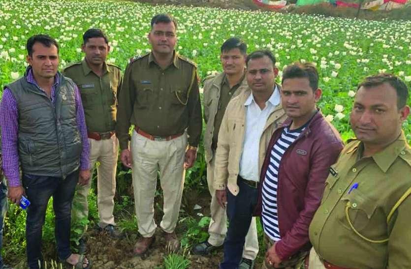 पहले पथराव कर आधा बीघा खेत से पुलिस को भगाया, फिर खुर्दबुर्द किए अफीम के पौधे, बदमाश फरार