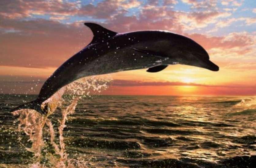 गंगा डॉलफिन को लेकर RTI में हुआ बड़ा खुलासा, पिछले 10 वर्षों में इतनों का हुआ शिकार