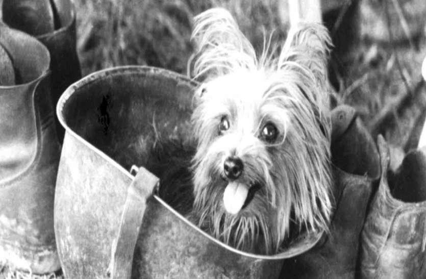 जब एक छोटे से कुत्ते ने बचाई 250 सैनिकों जान, पूरी दुनिया रह गई हैरान