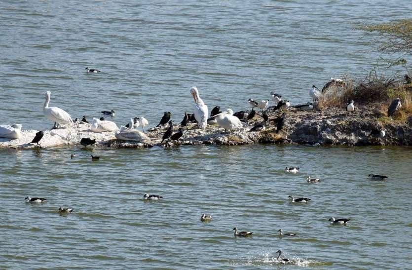 जोधपुर के लालसागर में पक्षियों का कलरव, देखें तस्वीरें