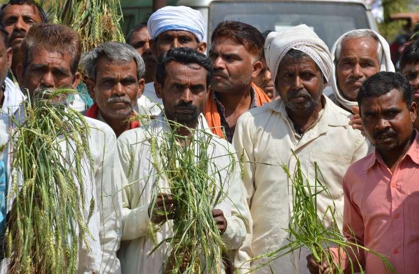 केन्द्रीय मंत्री ने दिया बडा बयान—गहलोत सरकार ने मारी किसानों के पेट पर लात