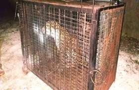 पोल्ट्री फार्म में लगातार मर रही थी मुर्गियां, जब संचालक ने रखी नजर तो निकला कुछ ऐसा की मचा हड़कंप