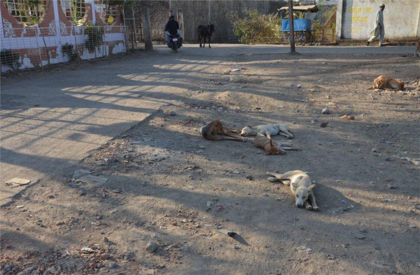 आवारा कुत्ता बने लोगों के लिए परेशानी, आए दिन लोगों को बना रहे अपना शिकार