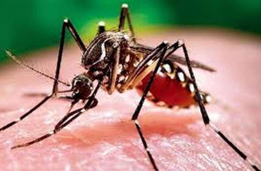 मच्छर काटने का दर्द बताया सीएम को: सीएम हेल्पलाइन पर बताई मच्छरदानी नहीं मिलने की शिकायत