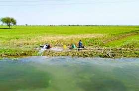 12 किसानों की सौ बीघा खेत में खड़ी गेहूं की फसल में भरा पानी