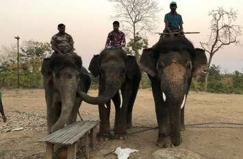 Video : बिगड़ैल हाथियों को नियंत्रित करने कर्नाटका से योगलक्ष्मी और गंगा के साथ यहां पहुंचे दुर्योधन, तीरथ व परशुराम