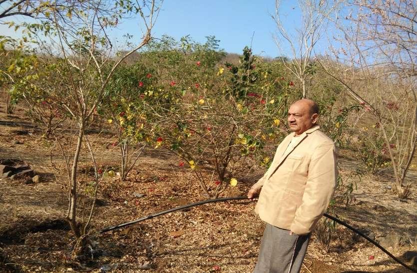वेस्ट वाटर से बचा रहे पेड़-पौधे और फुलवारी